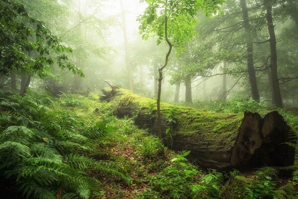 Holzinvestment Waldbild